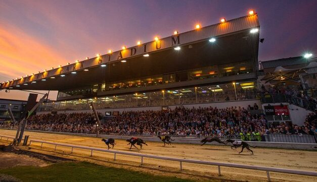 Dearbhla O'Brien Proposed as New CEO of Greyhound Racing Ireland