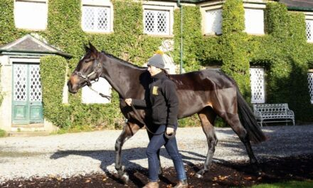 Your Chance to Own a Racehorse with Sport for Business and All About Sunday