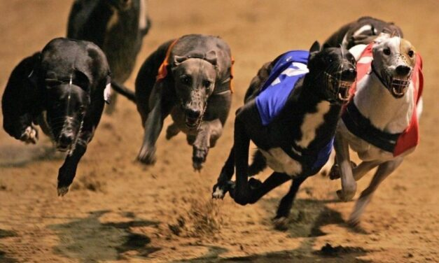 Greyhound Racing Sets Budget for 2021