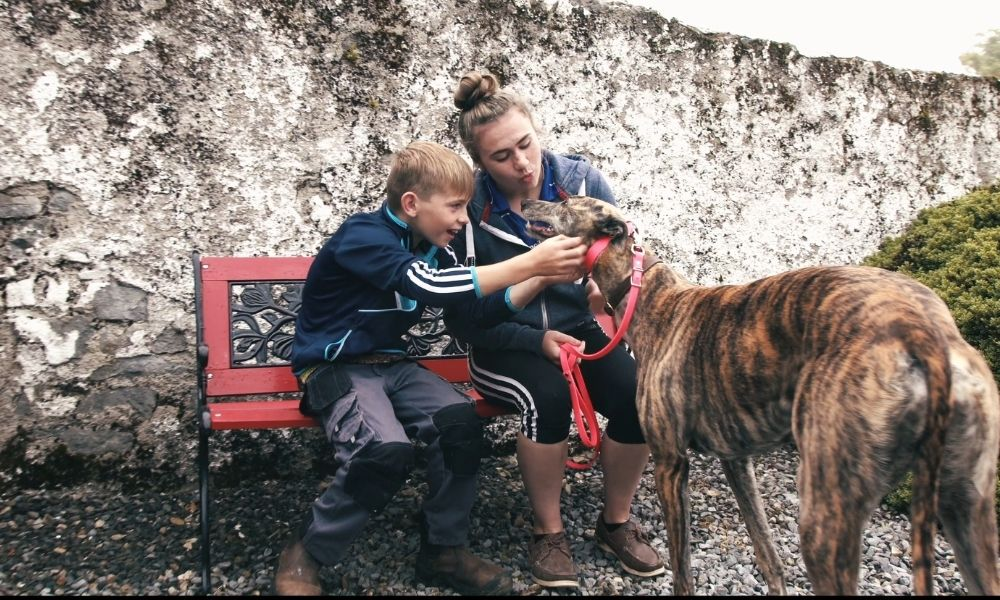 Ireland's First Care Centre for Retired Greyhounds