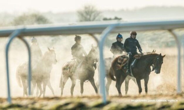 Punchestown Ready to Shine on Screen