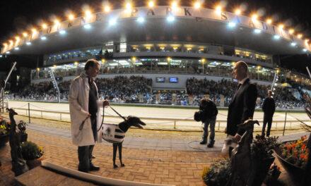 Boylesports Greyhound Derby Underway Tonight