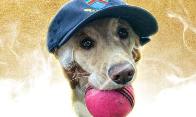 Irish Cricket Stars Gain Global Recognition