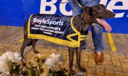 Susie Sapphire Makes History in Boylesports Greyhound Derby Win
